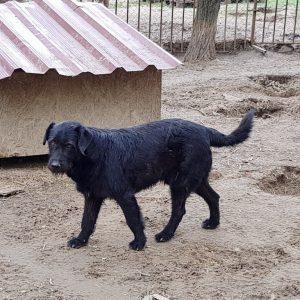Cipri, zwarte reu ter adoptie