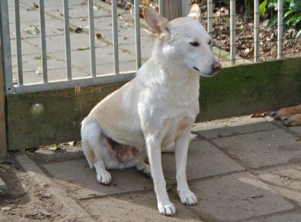 Wit middelgroot hondje