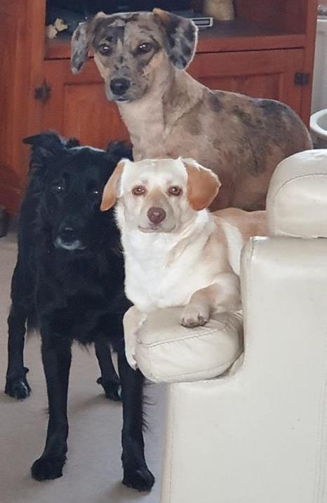 Doortje Dorito, (bovenaan) met haar 2 zusjes Daisy Doerak en Dolly Dakota. Doortje is de hele dag aan het stoeien met Dolly.?