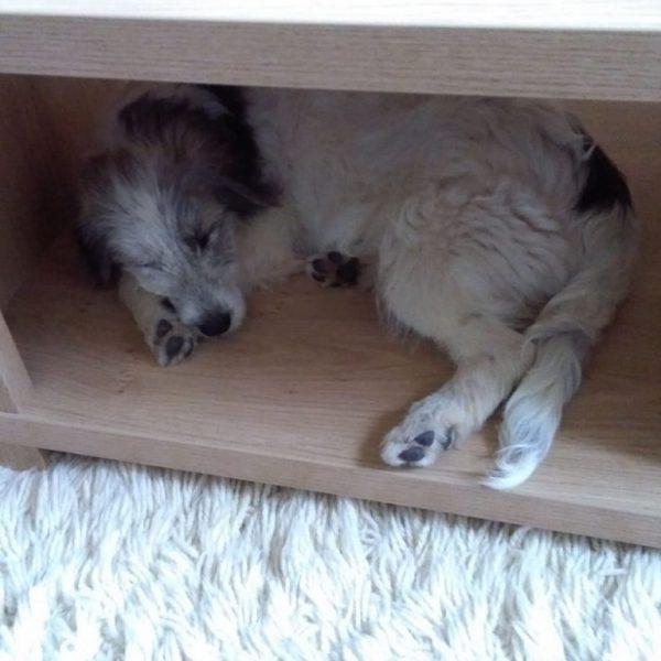 Dag 1: Ik slaap in de salontafel, dat ligt best lekker.