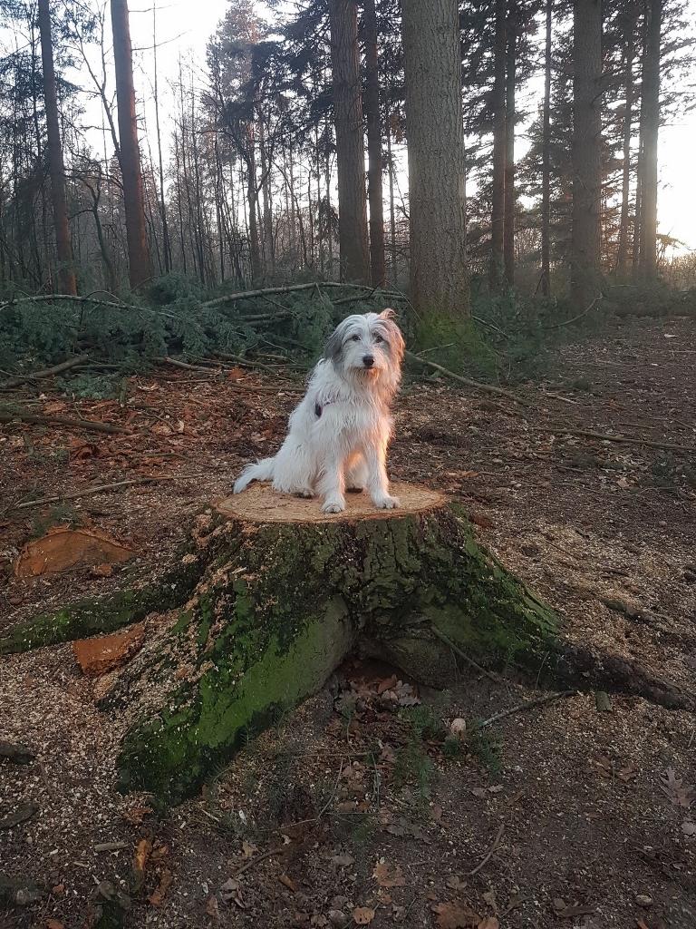 Lekker in het bos aan het klimmen en klauteren ??