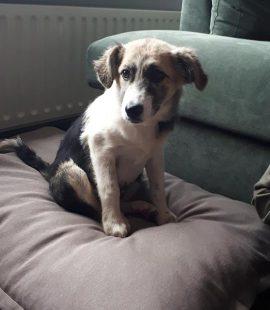 Adoptie Betsy, nu Jilz