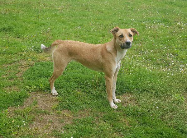 Luna, jonge hond ter adoptie