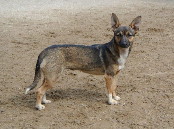 Klein lief hondje