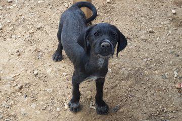 Pup Sofie zwart teefje