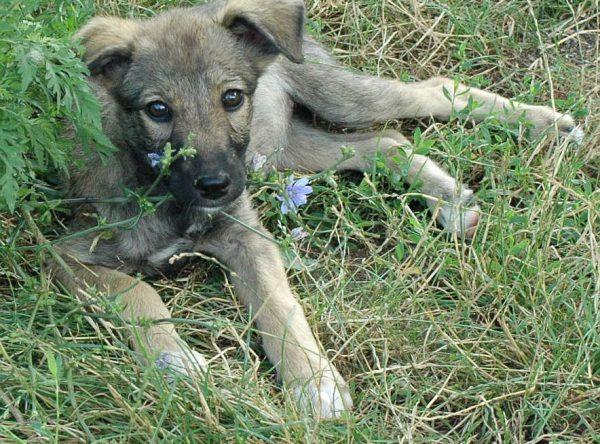 Pup Mila ter adoptie