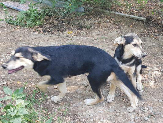 Pups Rex en Rickie