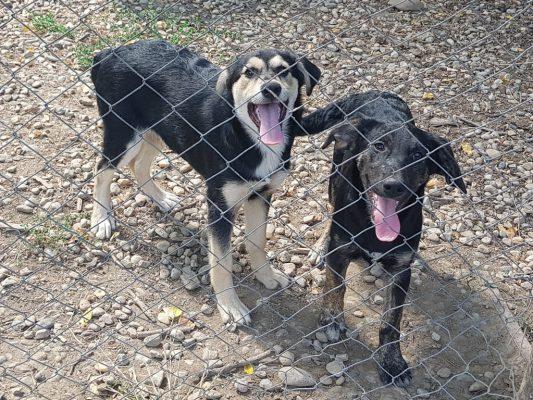 Pups in het asiel