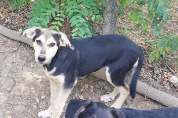 Pup Rickie ter adoptie