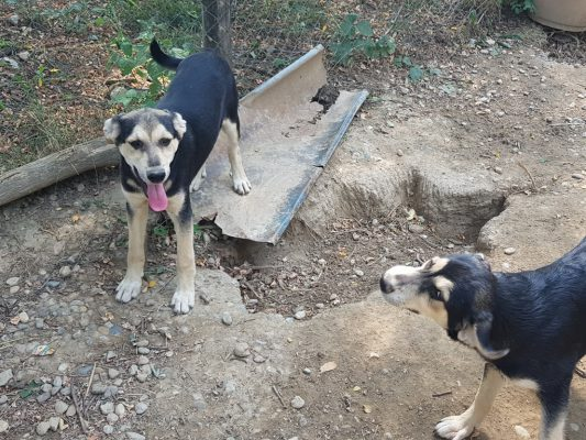 Leuke pups in het asiel