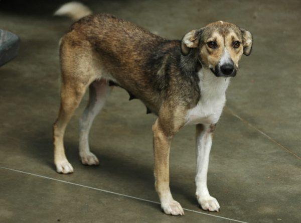 Middelgroot hondje ter adoptie