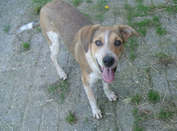 Hond adopteren: lieve Solo