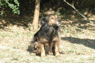 Tedy klein hondje ter adoptie
