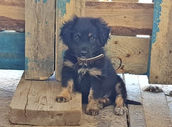 Pup Turbo