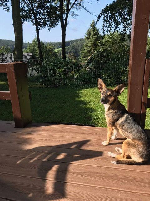In de tuin, de veranda en het huis in Duitsland voelt zij zich helemaal thuis en is geregeld ook al wat waaks. Ook met de kat gaat het prima! Ze gaan samen eigenlijk in hetzelfde ritme mee. Tegelijk naar buiten, samen eten, etc. Beiden heel relaxt. Daar zijn we ook zo blij mee!!!