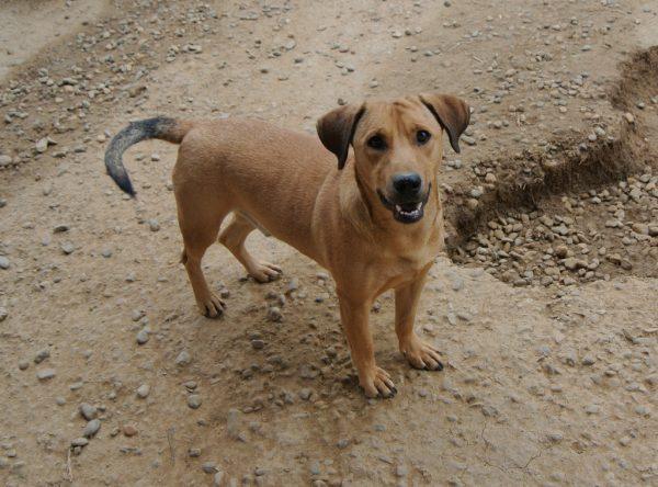 Harley leuke hond ter adoptie