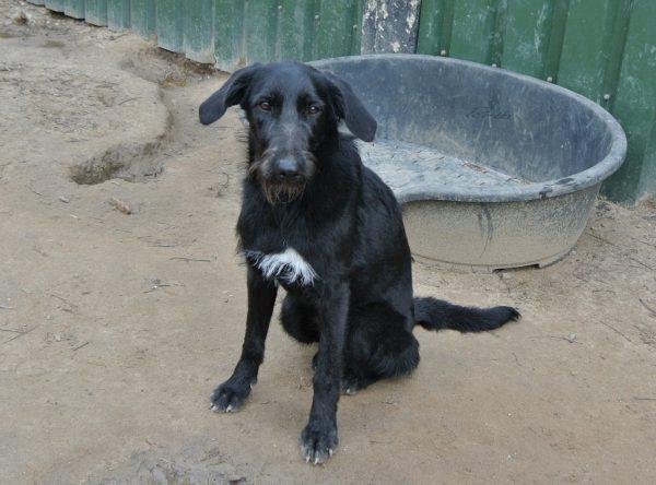 Hond Daphne
