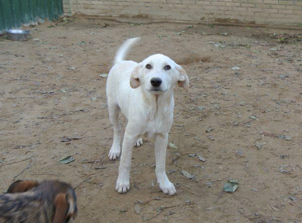 Dupla mooie witte pup