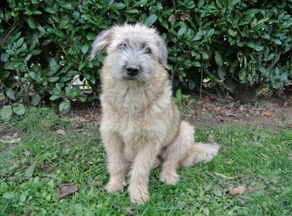 Gofri schattig hondje ter adoptie