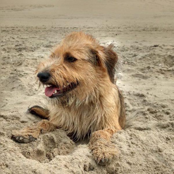 Happy dog Romy