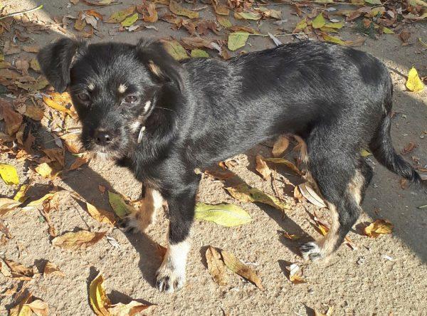 Leuk zwart hondje