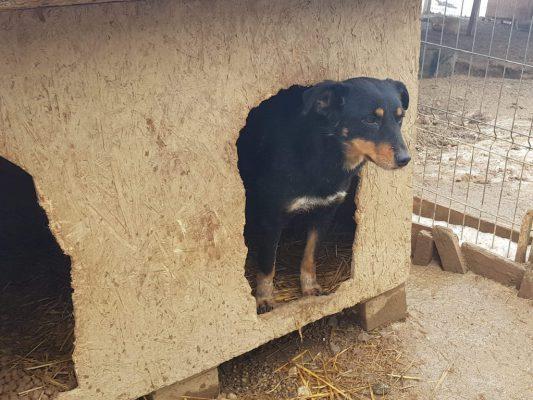 Simi in het hondenhok