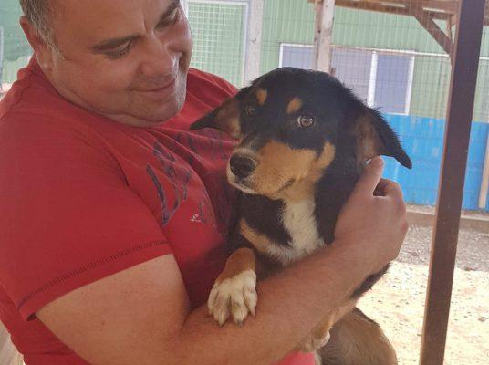 Lief hondje ter adoptie