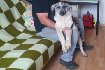 Pup Bandit uit Roemenië