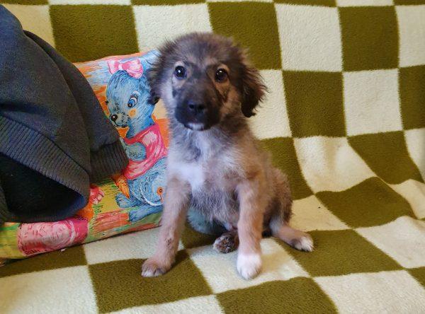 Pup Barbie ter adoptie