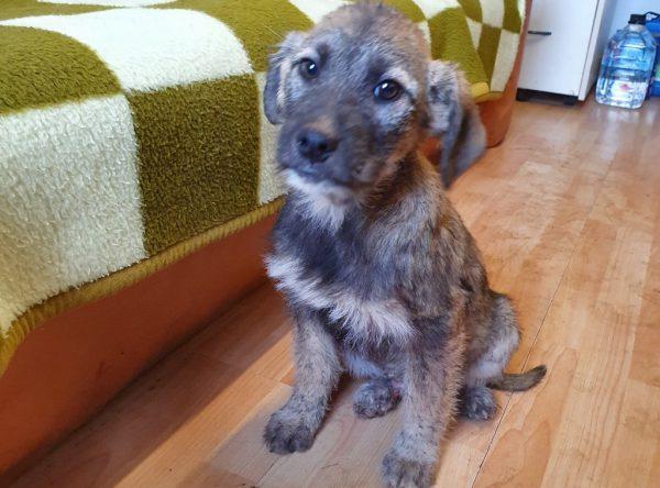 Leuke pup ter adoptie