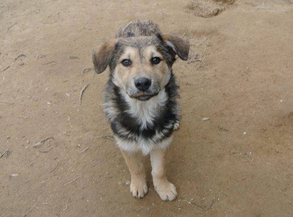Pup Cira lief hondje