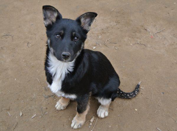 Pup Desi ter adoptie