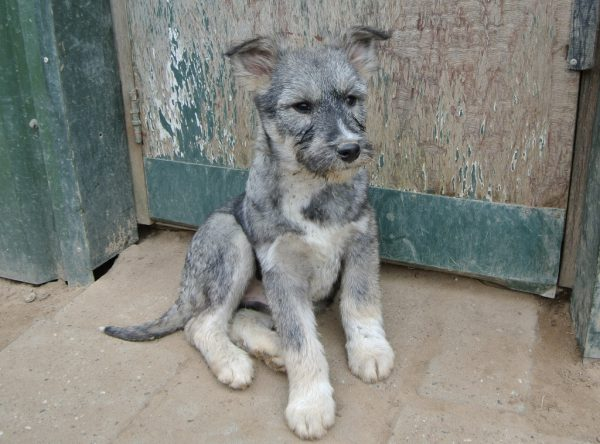 Pup Dido leuk snoetje