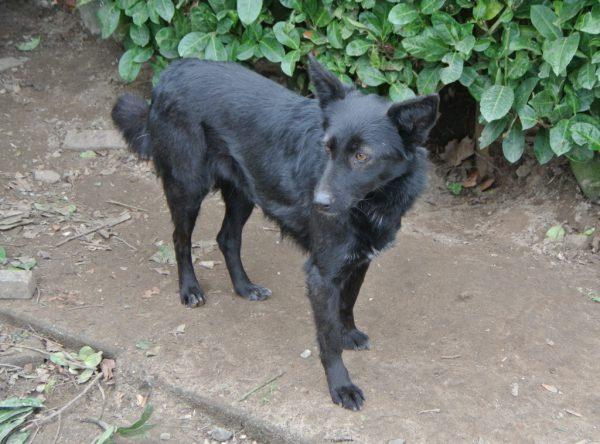 Kara mooi zwart hondje