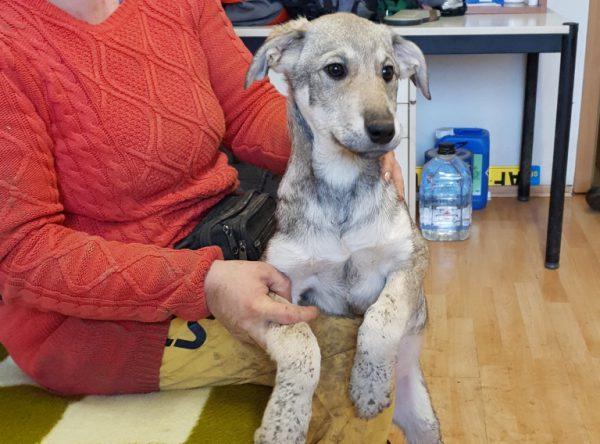 Pup Paula leuk mixje ter adoptie