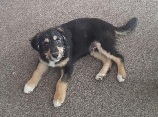 Kleine pup Victor