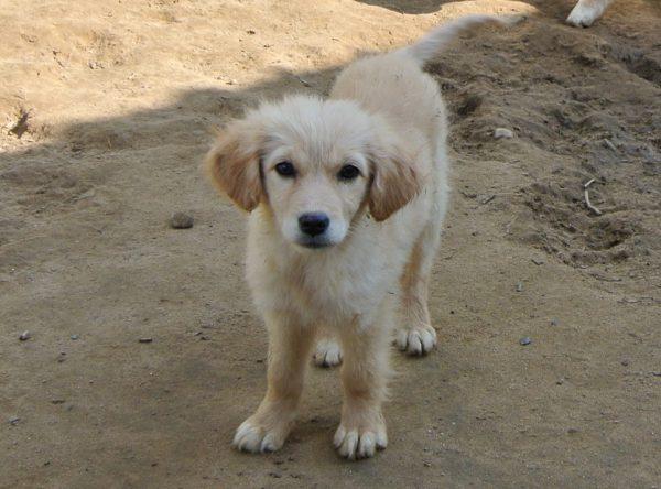 Puppy Barbie schattig hondje ter adoptie