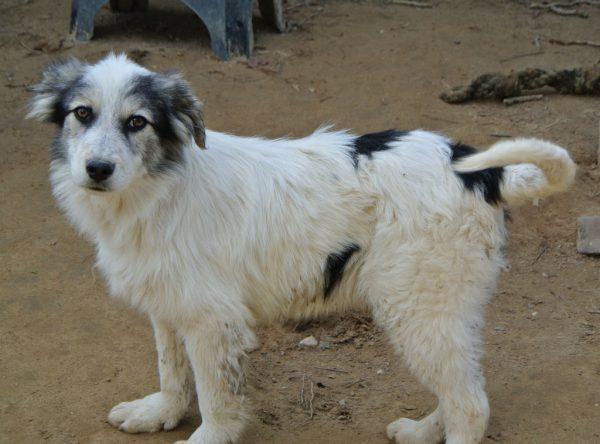 Pup Boaz lief schatje