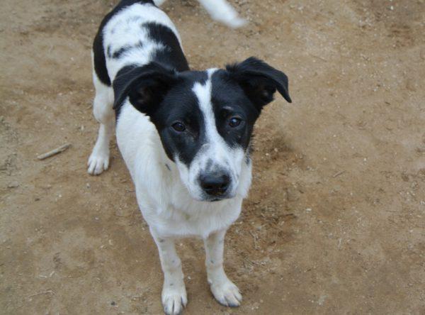 Lexie zwart-wit pupje