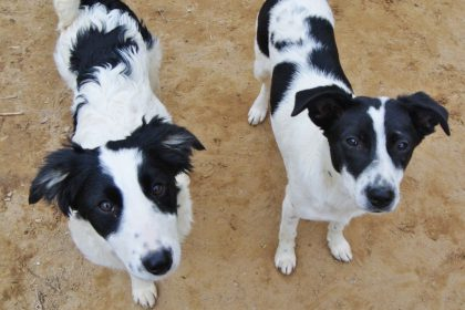 Puppies Milla en Lexie