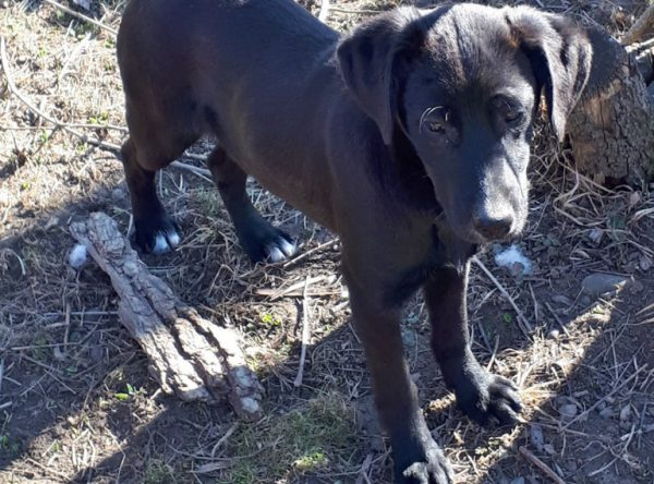 Pup Luna zwart hondje