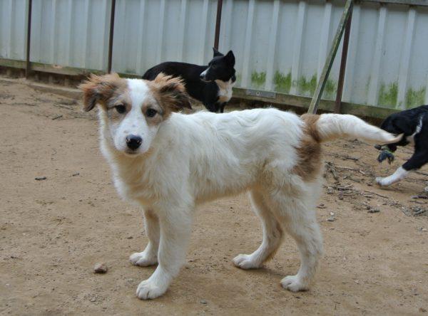 Pup May wit met lichtbruin