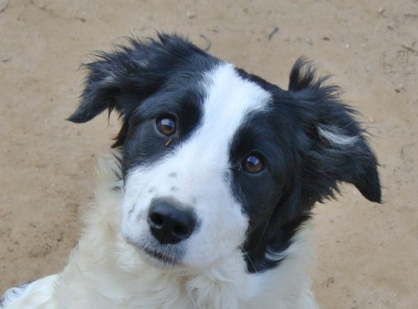 Pup Milly zwart wit hondje