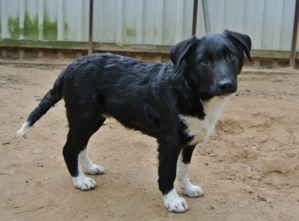 Pup Monty leuke kruising