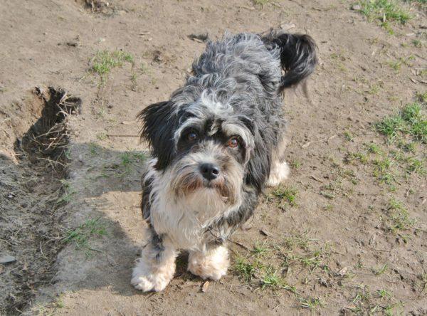 Nyko boomer hondje ter adoptie
