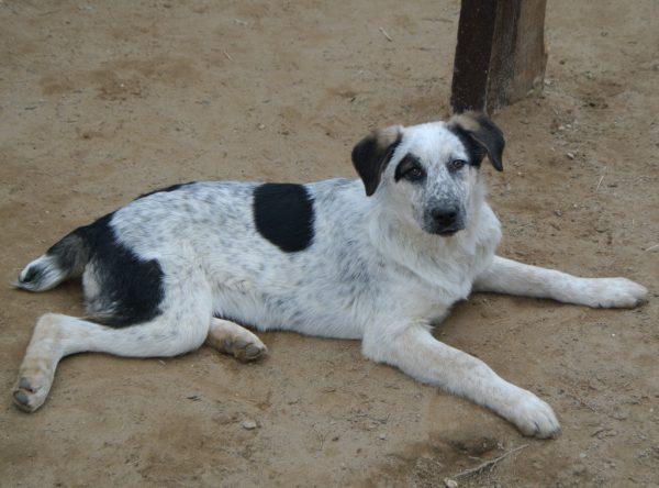 Pup Tisa leuke kruising