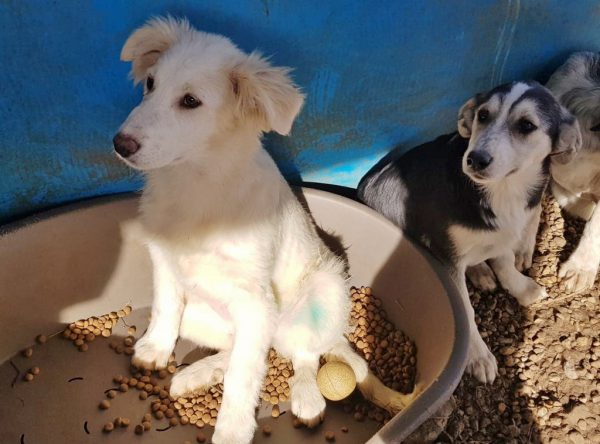 Pup Tora