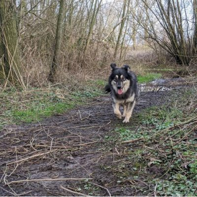 Dit is Sam tijdens een van zijn eerste wandelingen in de natuur