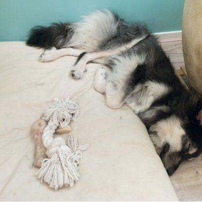 Hij heeft verschillende slaapposities die we erg leuk vinden😊