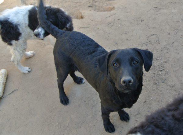 Puppy Evi zwarte mix